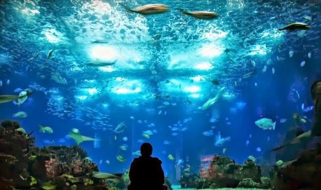 Entradas para el Oceanario de Lisboa