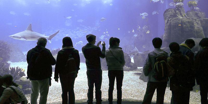 Atracciones del Oceanario de Lisboa