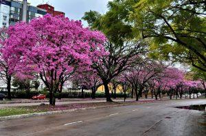 Primavera en Lisboa - calles florecidas